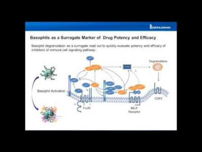Basophils as Biomarker for Potency and Efficacy of Drugs in Development Flow CAST®