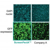 Lipid transfection reagent DNA siRNA ScreenFect™ A 1ml Incella Wako